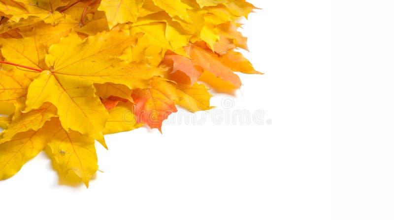 Textura do outono Folhas de plátano coloridas O fenômeno é commonl imagens de stock