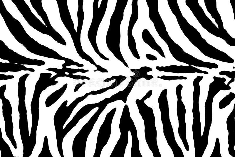 Textura do teste padrão da zebra imagens de stock