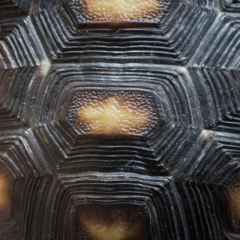 Textura do teste padrão do shell da tartaruga fotos de stock