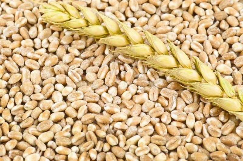 Download Textura do trigo imagem de stock. Imagem de farinha, heap - 29827735