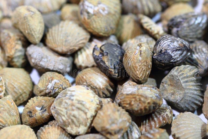 Textura dos fosils de Shell fotos de stock royalty free
