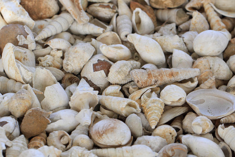 Textura dos fosils de Shell fotografia de stock royalty free