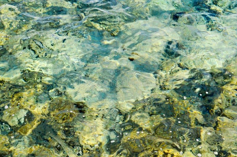 A textura dos recifes de corais verdes no assoalho de mar é uma vista através do prisma da água transparente marinha salina O fun foto de stock royalty free