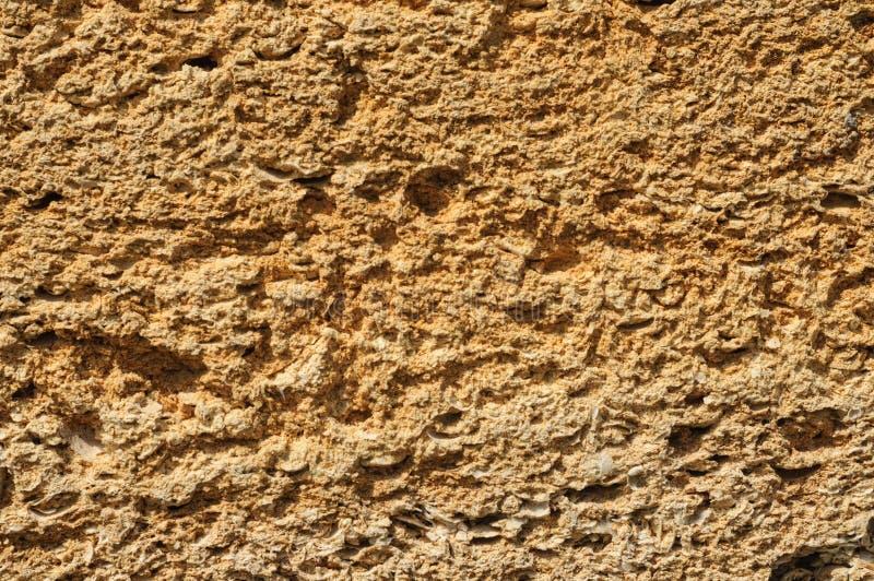 Textura dos tijolos ásperos feitos do marisco foto de stock royalty free