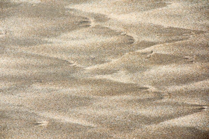 Textura e fundo da areia fotos de stock