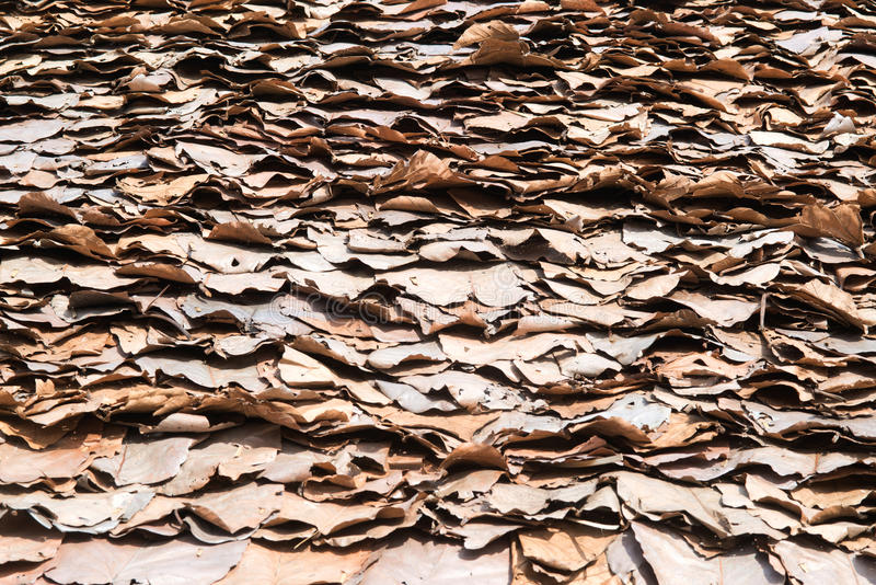 A textura e o fundo do telhado do vintage feitos com teca seca folheiam imagens de stock