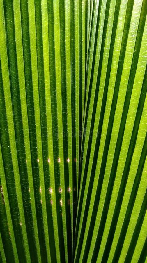 Textura em folha de palmeira fotografia de stock