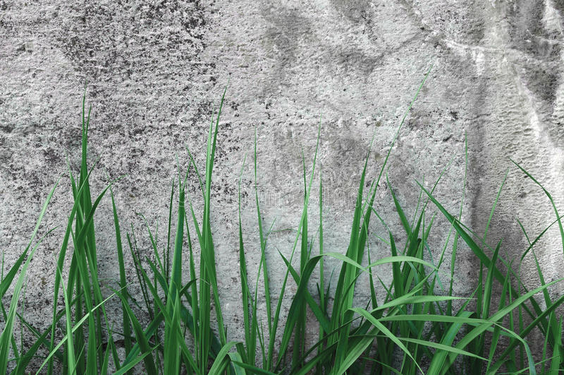 Textura escura de Grey Coarse Concrete Stone Wall, grama verde, rústico natural detalhado resistido envelhecido velho do close up fotografia de stock