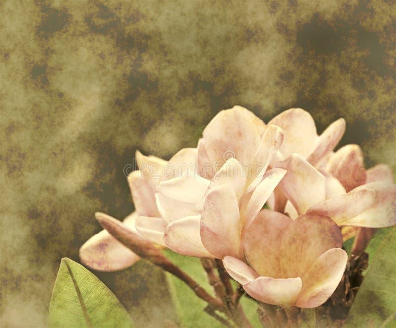 textura floral do papel da flor   fotos de stock