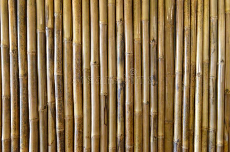 Textura, fundo e papel de parede de bambu Decora??o e projeto da parede foto de stock