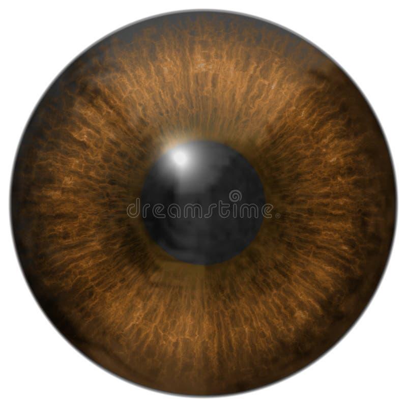 Textura generada iris de los alquileres del ojo libre illustration