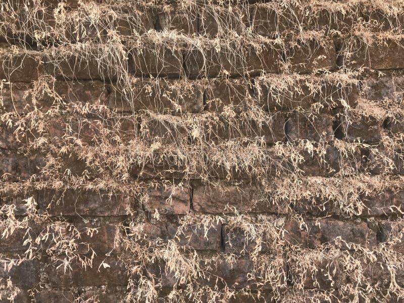 Textura Grama em uma parede vertical imagem de stock royalty free