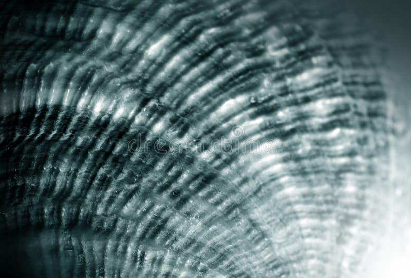 Textura gris de la concha marina imagenes de archivo