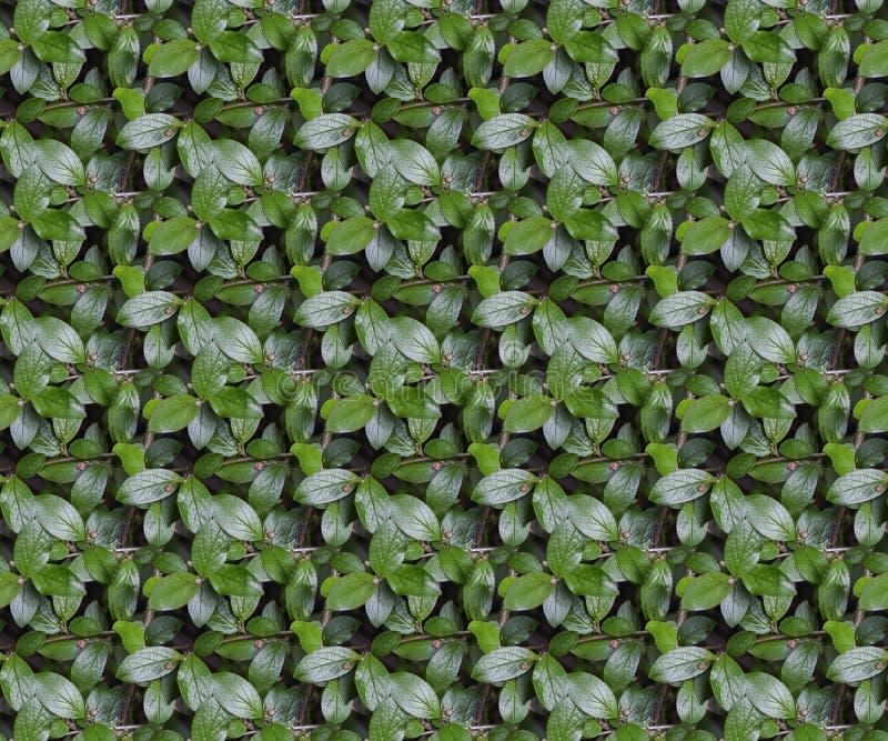 Textura inconsútil del modelo de la rama del arbusto con las hojas verdes ilustración del vector