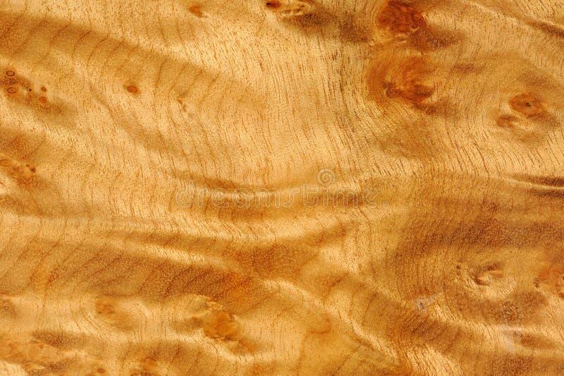 Textura lustrada da madeira da raiz de Madrone imagem de stock