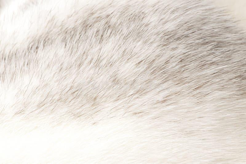 Textura luxuoso da pele do vison fotografia de stock