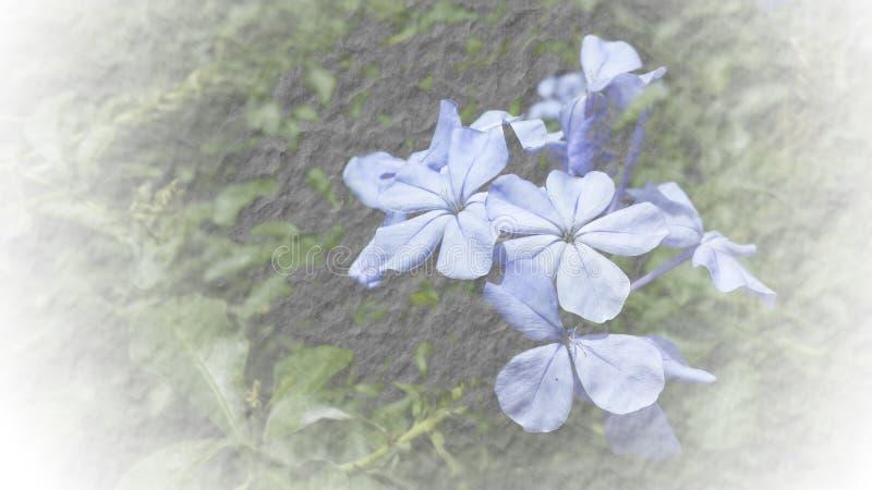 Textura macia abstrata do papel da amoreira da flor do foco para o backgroun fotos de stock