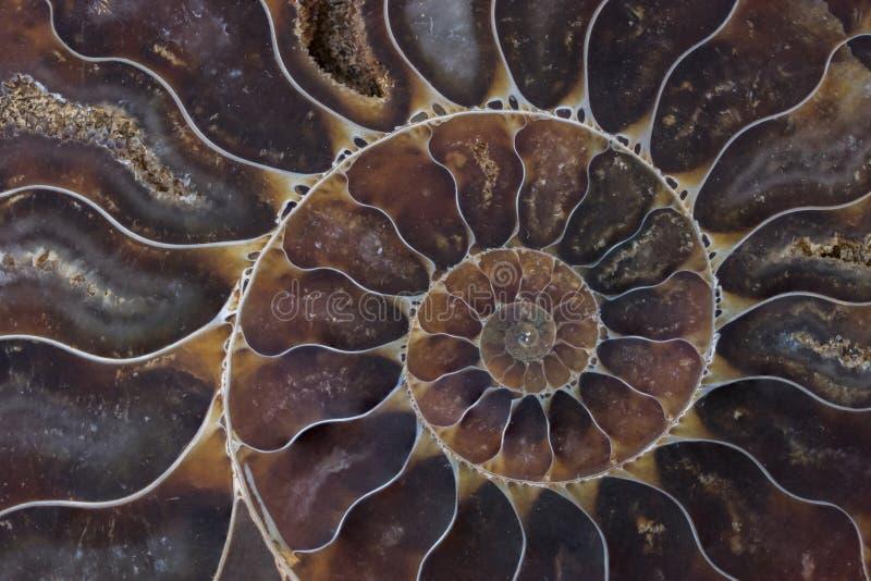 Textura macra de la cáscara fósil imágenes de archivo libres de regalías
