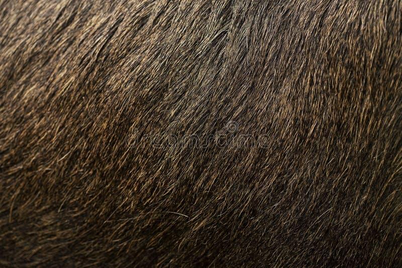 Textura macra de la piel de alces marrones fotografía de archivo libre de regalías
