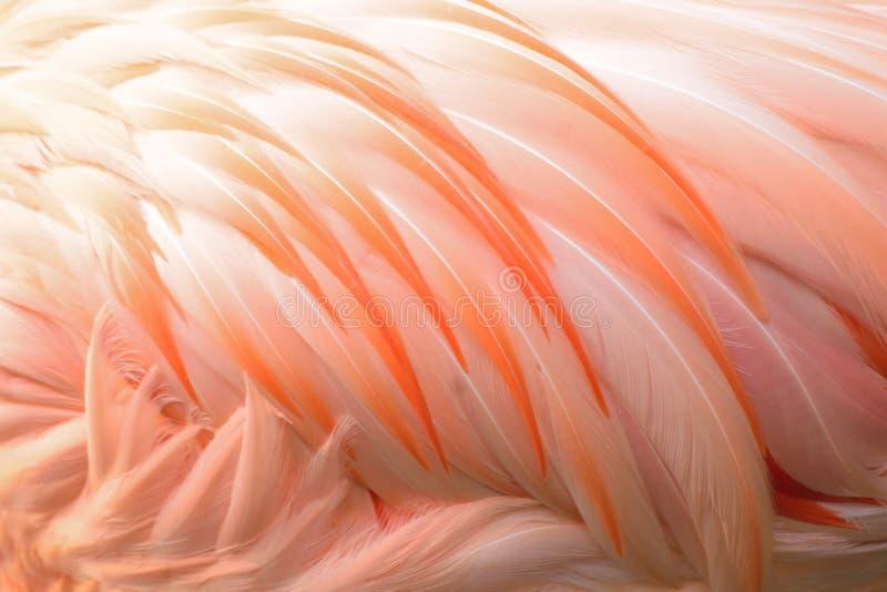 Textura macra de las plumas de pájaro del flamenco fotografía de archivo