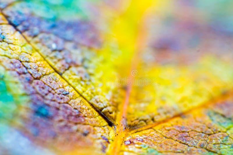 Textura macra del fondo de las hojas, colores del arco iris, foco suave, profundidad del campo baja fotos de archivo libres de regalías