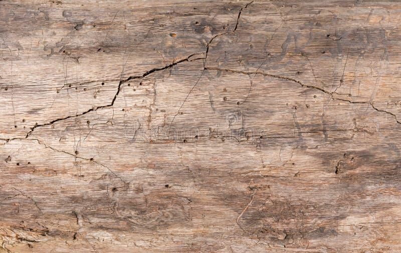 Textura, madeira velha O tronco de uma ?rvore velha sem casca com uma quebra profunda imagem de stock royalty free