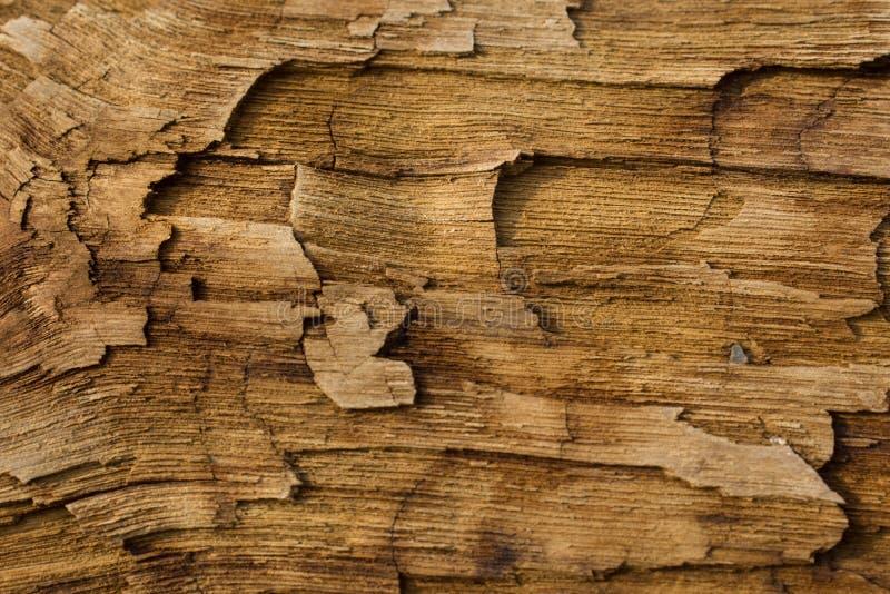 Textura Madera fotografía de archivo libre de regalías