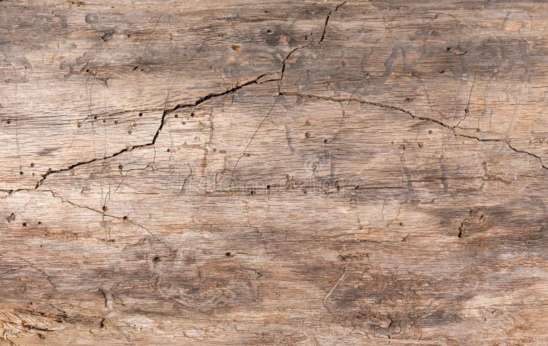 Textura, madera vieja El tronco de un ?rbol viejo sin la corteza con una grieta profunda imagen de archivo libre de regalías