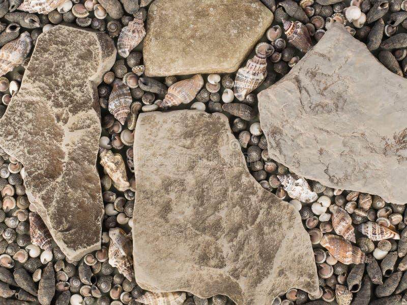 Textura marinha - várias conchas do mar e pedras imagem de stock royalty free