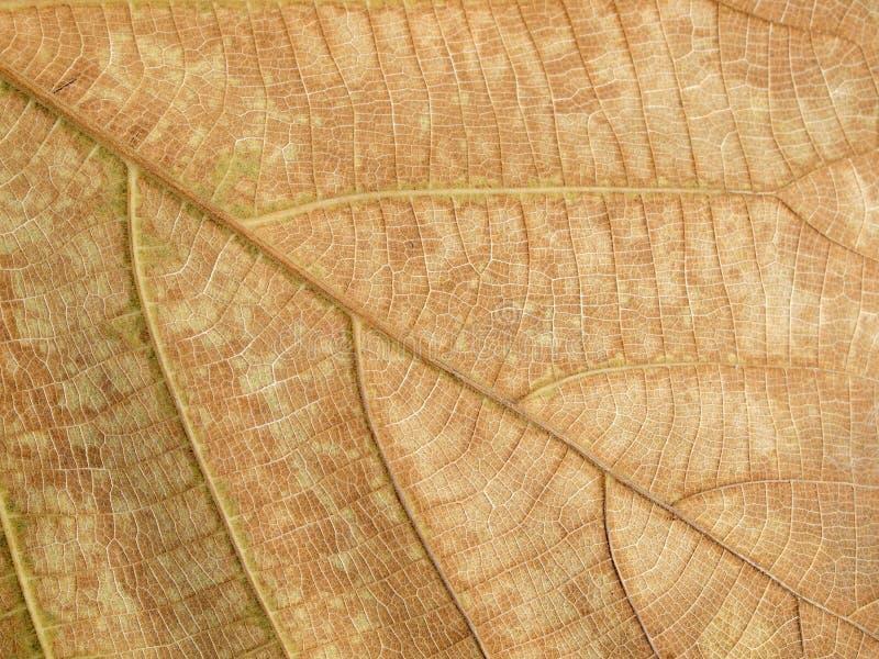 Textura marrom seca da folha imagem de stock royalty free