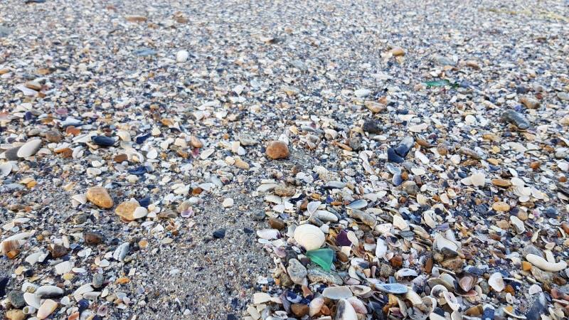 Textura molhada da concha do mar com vidro pequeno do mar de verde da forma do triângulo fotos de stock