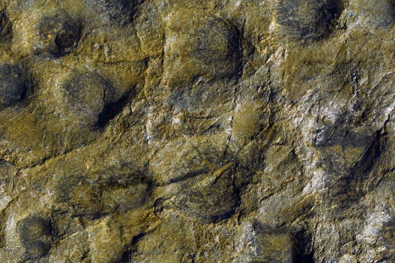 Textura molhada da rocha da praia fotos de stock royalty free