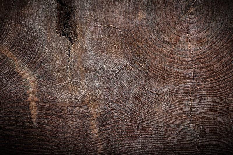 Textura muito velha da madeira do vintage do seção transversal do tronco de árvore imagem de stock
