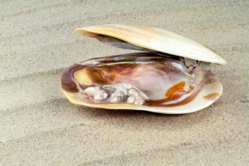 Textura nacarada con las perlas reales en una cáscara del mar fotos de archivo