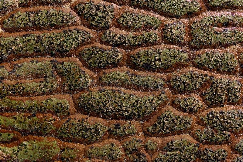 Textura natural da rocha da escala do dragão fotografia de stock