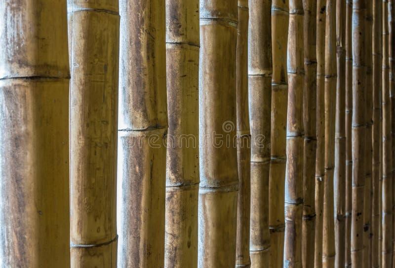 Textura natural das varas de bambu fotos de stock royalty free