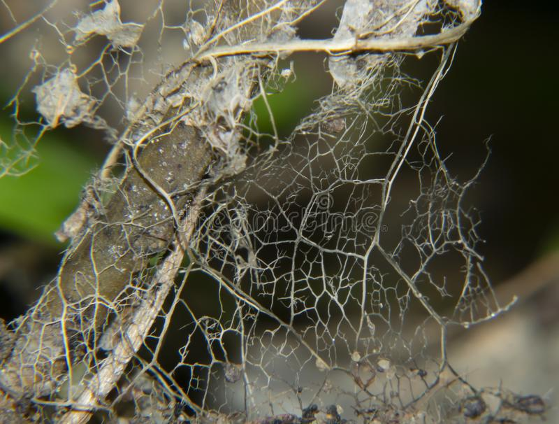 Textura natural de la hoja muerta imagen de archivo
