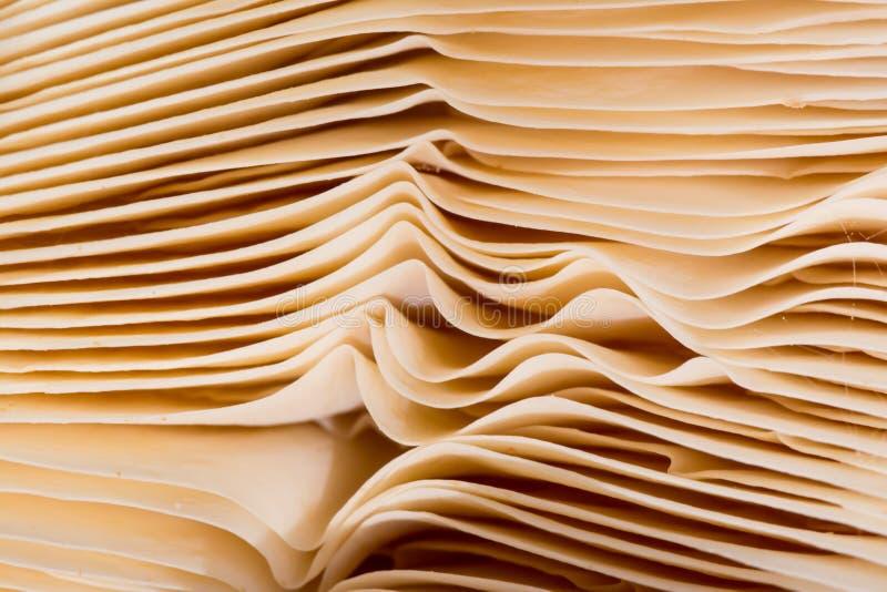 Textura natural feita por brânquias finas onduladas de um cogumelo fotografia de stock royalty free