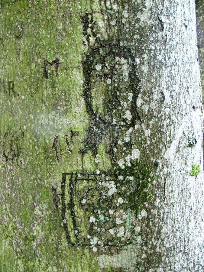Textura natural interessante - casca da madeira velha com musgo e letras gravadas foto de stock