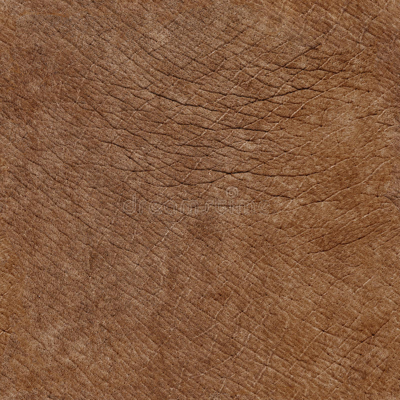 Textura natural sem emenda da pele do elefante imagens de stock