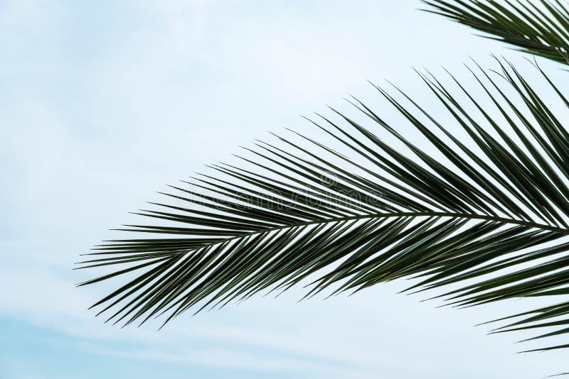 Textura o fondo natural de las hojas de la palma imagenes de archivo