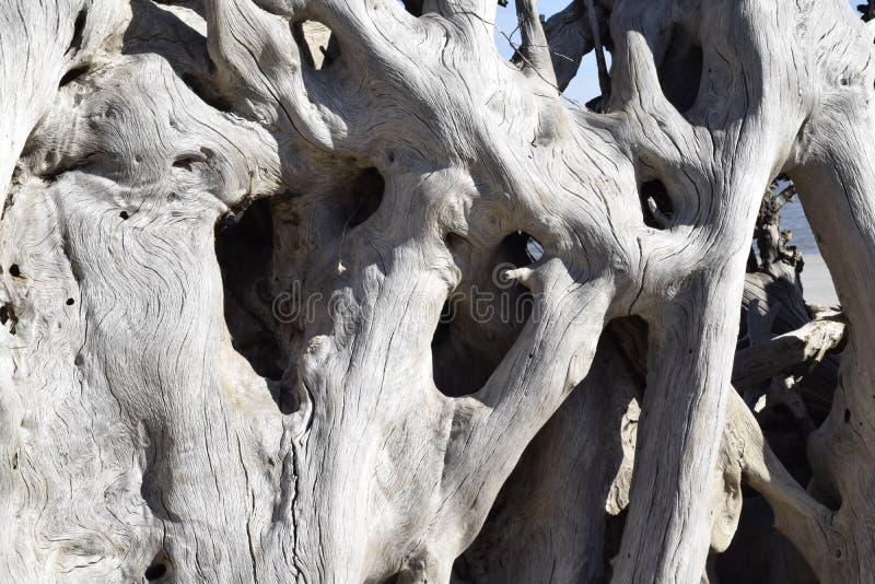 Textura oca da madeira lançada à costa foto de stock royalty free