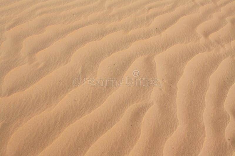 Textura ondulado da areia imagem de stock royalty free