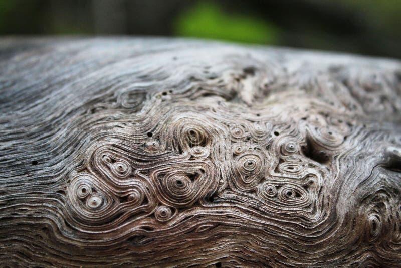 Textura orgânica do fundo dos redemoinhos de madeira imagem de stock