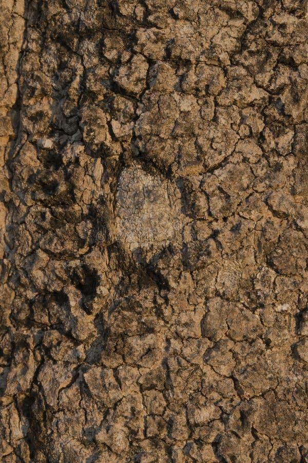 Textura oscura del fondo del árbol imagen de archivo