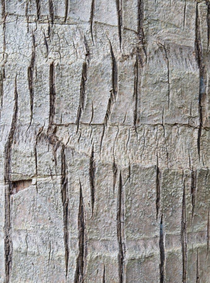 Textura ou fundo da árvore de coco imagem de stock royalty free