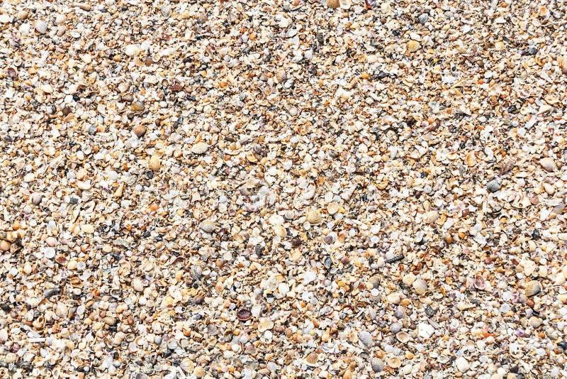 textura ou fundo do marisco da natureza imagem de stock