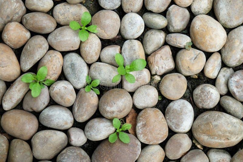 Textura oval de pedra do mar com folhas verdes fotografia de stock royalty free