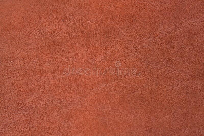 Textura - pele fotografia de stock