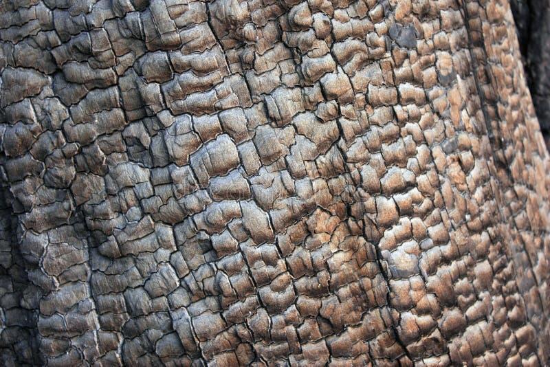 Textura preta de carvão de uma árvore grande velha queimada Construção de casa destruída após um fogo, close-up imagens de stock royalty free